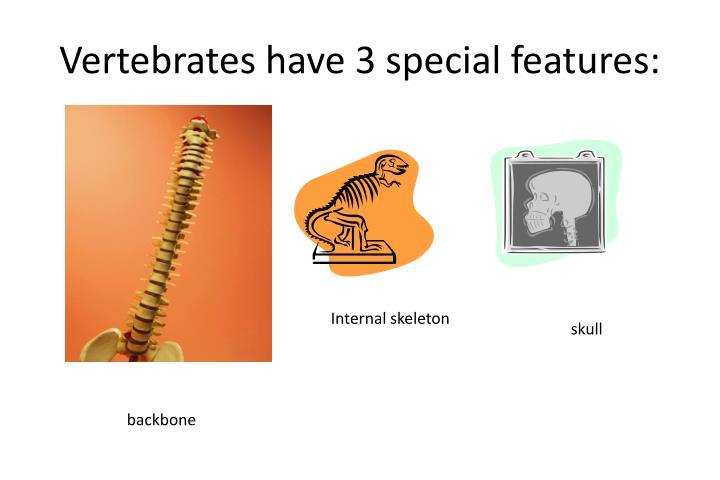 Vertebrates have 3 special features