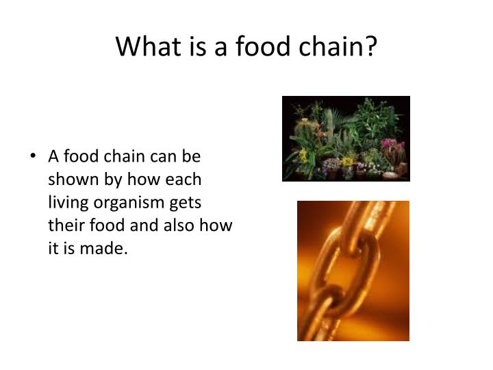 what is a food chain n.