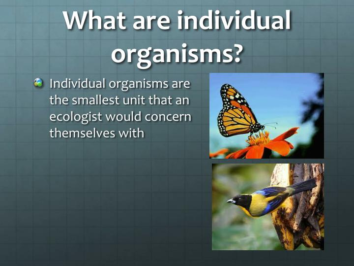 What are individual organisms