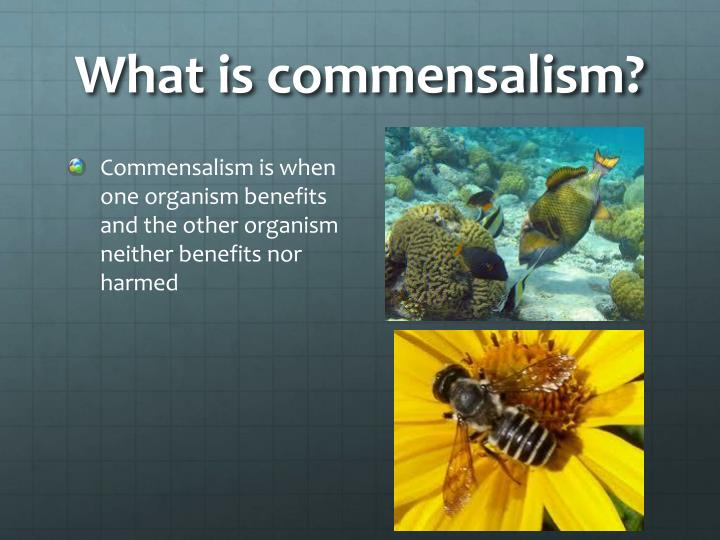 What is commensalism?