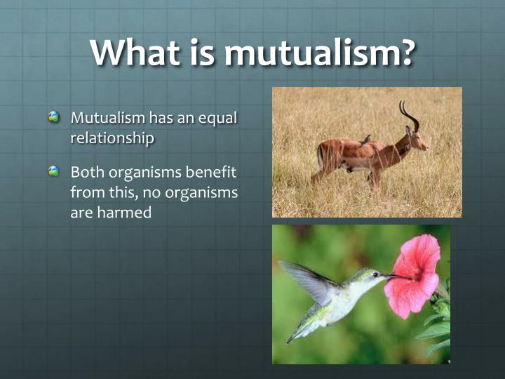 What is mutualism?