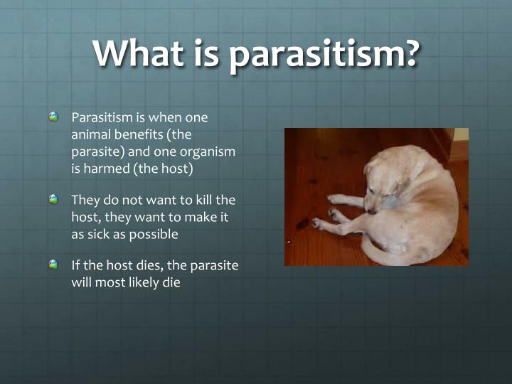 What is parasitism?