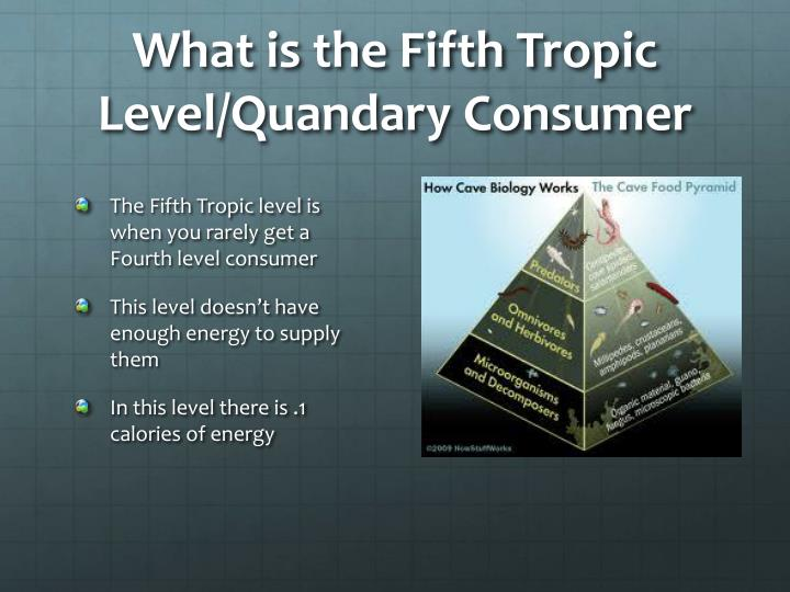 What is the Fifth Tropic Level/Quandary Consumer