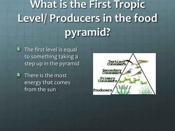 What is the First Tropic Level/ Producers in the food pyramid?