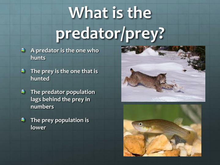 What is the predator/prey?