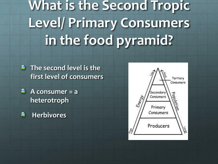 What is the Second Tropic Level/ Primary Consumers in the food pyramid?