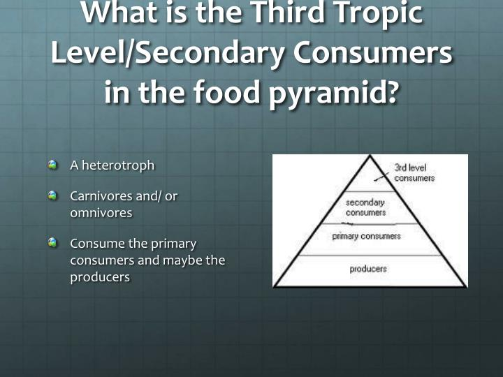 What is the Third Tropic Level/Secondary Consumers in the food pyramid?