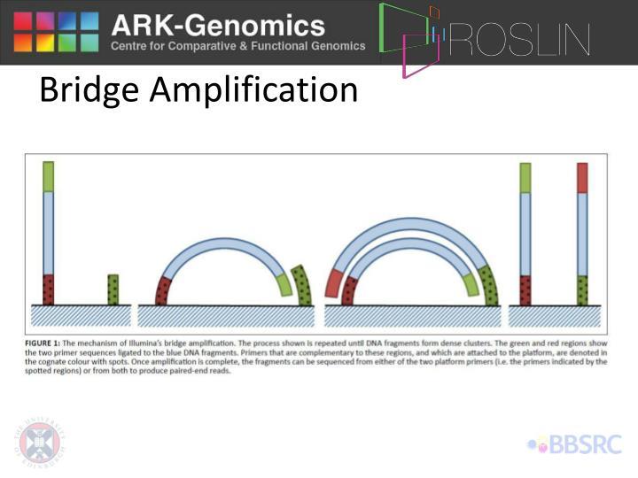 Bridge Amplification