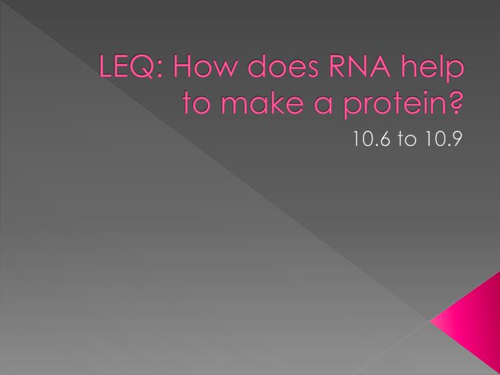 leq how does rna help to make a protein n.