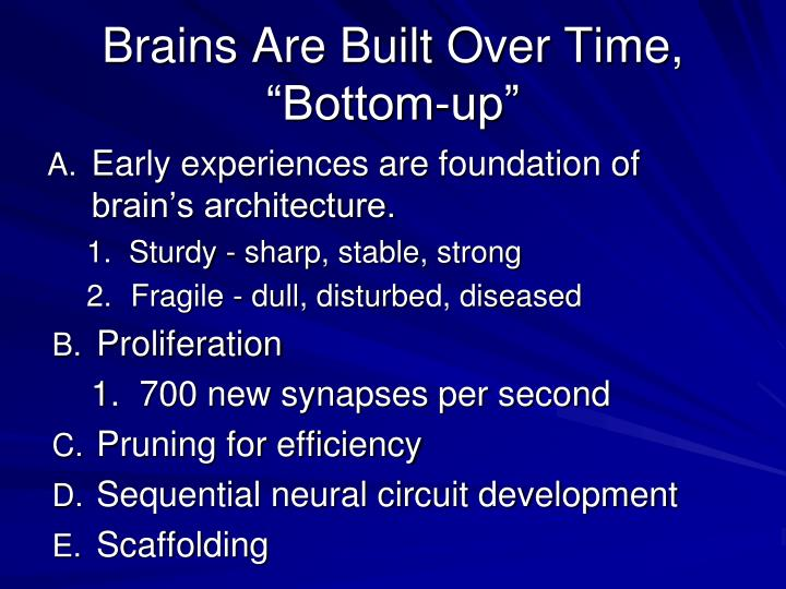 """Brains Are Built Over Time, """"Bottom-up"""""""