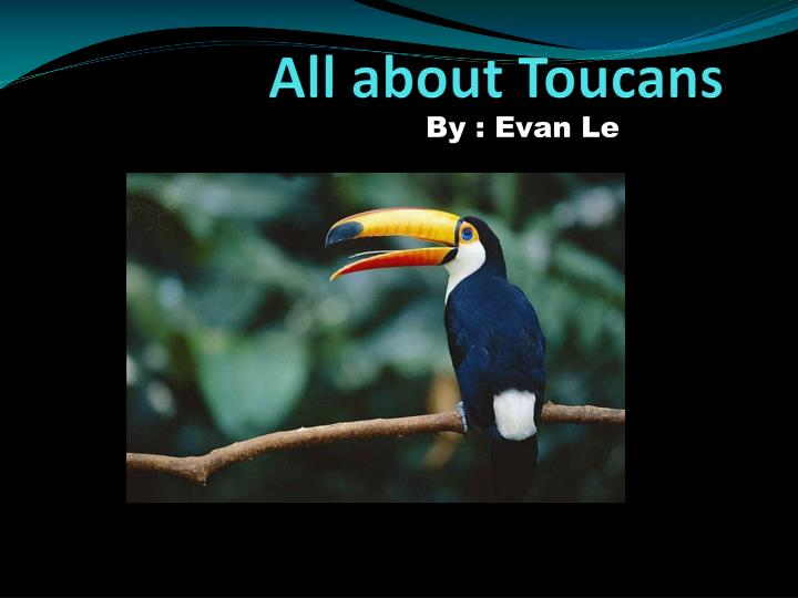 all about toucans n.
