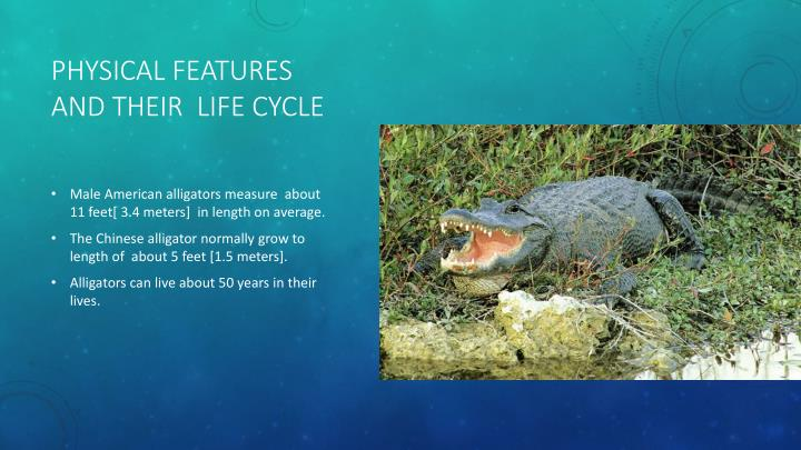 Physical features and their  life cycle