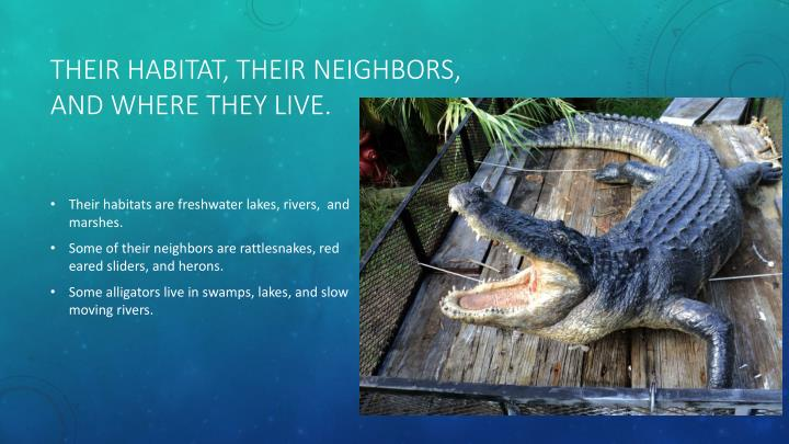 Their habitat their neighbors and where they live