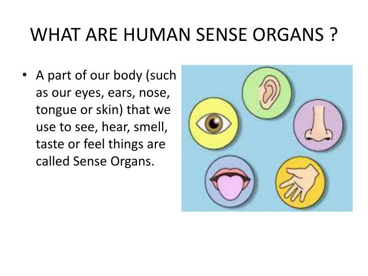 """PPT - FROM TASTING TO DIGESTING SENSE ORGAN – """" TONGUE """" PowerPoint ..."""