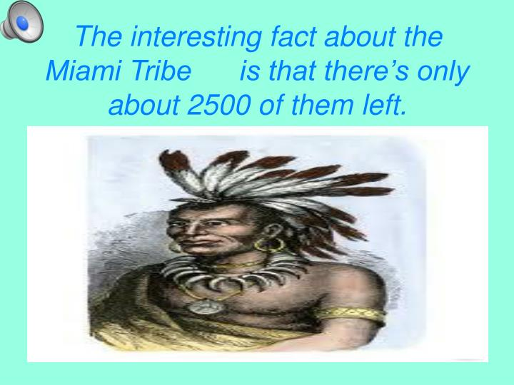 The interesting fact about the Miami Tribe      is that there's only about 2500 of them left.