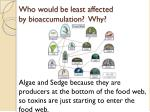who would be least affected by bioaccumulation why1