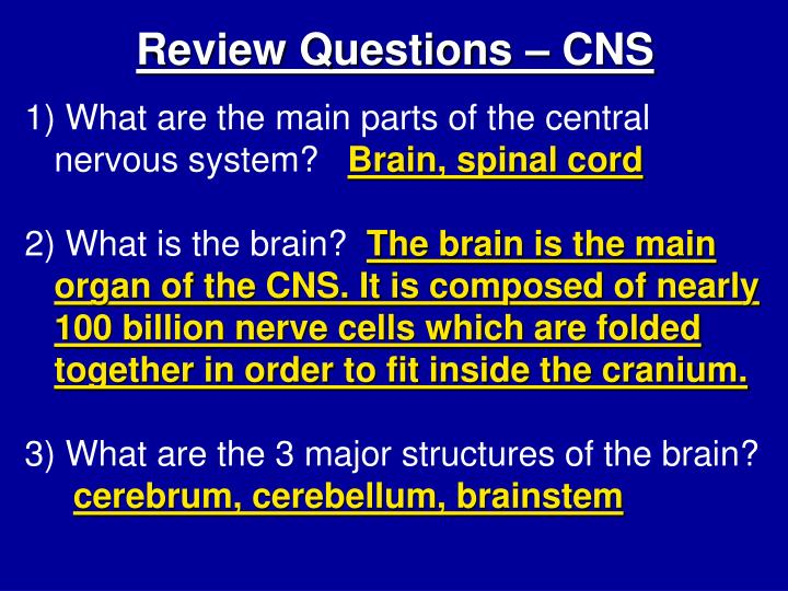 Review Questions – CNS