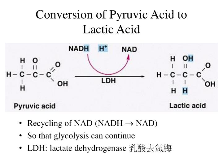 Conversion of pyruvic acid to lactic acid