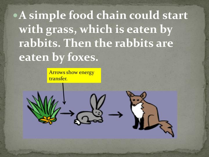 A simple food chain could start with grass, which is eaten by rabbits. Then the rabbits are eaten by foxes.