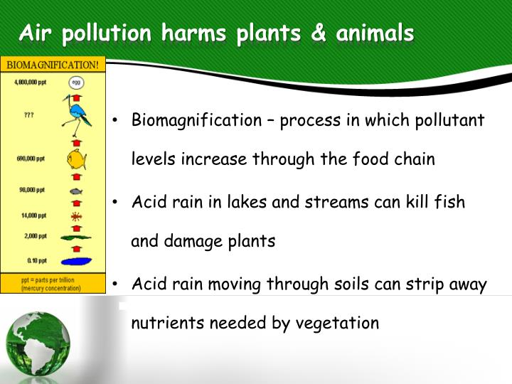 PPT - Effects of Air Pollution PowerPoint Presentation ...Air Pollution Effects On Animals And Plants