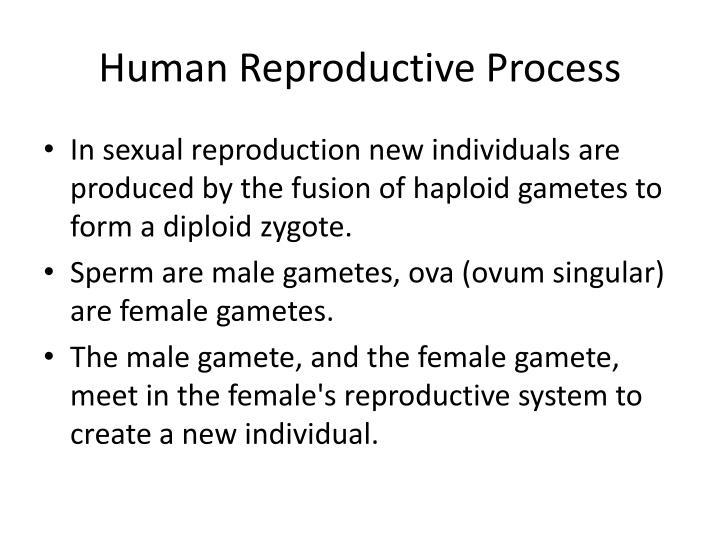 H uman r eproductive p rocess