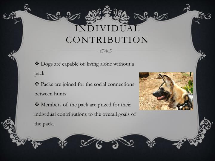 Individual Contribution