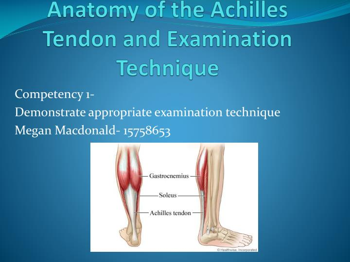 PPT - Anatomy of the Achilles Tendon and Examination Technique ...