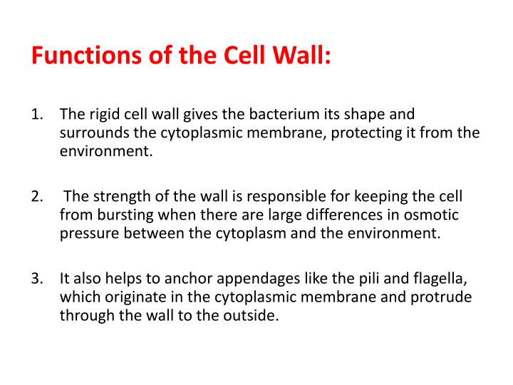 Functions of the Cell Wall: