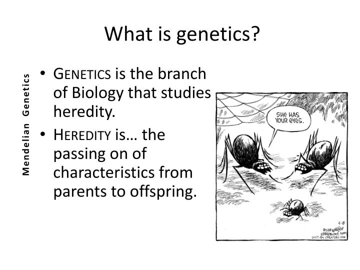 heredity a vital biological process • biological factors • cultural factors • family factors • social factors • situational factors biological factors heredity: • it refers to physical stature, facial attractiveness, sex, temperament, muscle composition and reflexes, energy level, and biological rhythms.