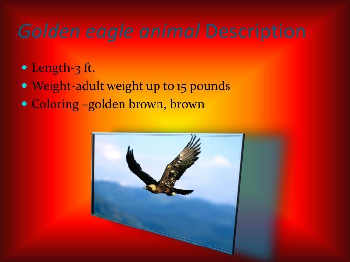 Golden eagle animal description