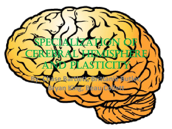 specialization of cerebral hemisphere and plasticity n.
