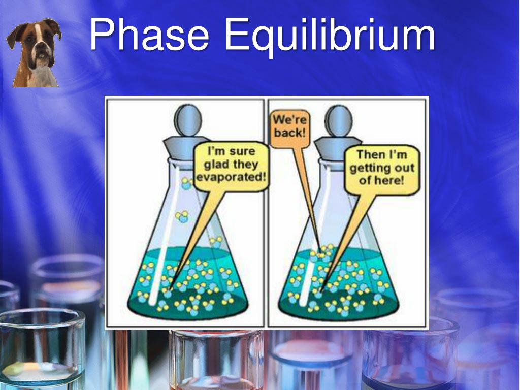 Ppt - Phase Equilibrium Powerpoint Presentation  Free Download