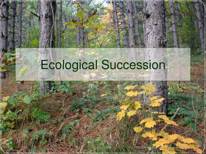 ecological succession n.