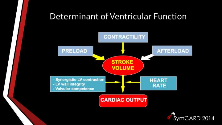 Determinant of ventricular function