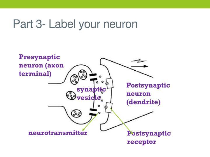 Part 3- Label your neuron