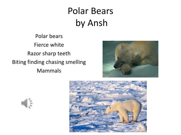 Polar bears by ansh