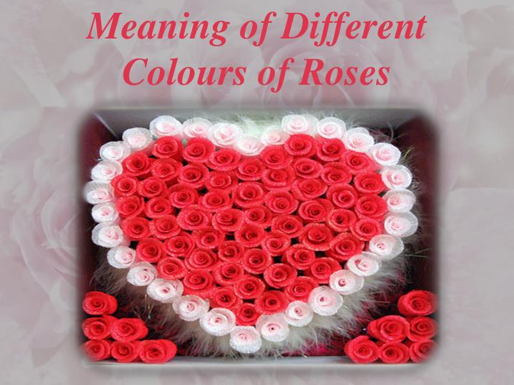Meaning of Different Colours of Roses