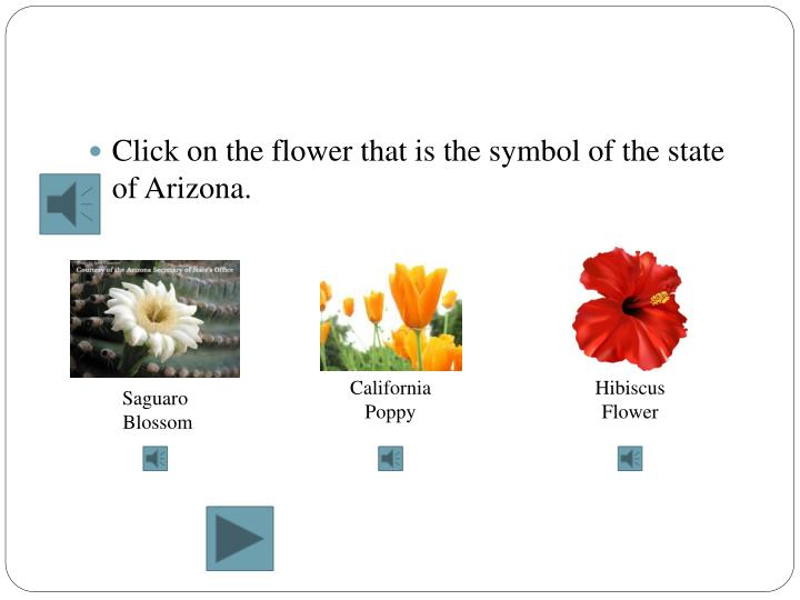 Click on the flower that is the symbol of the state of Arizona.