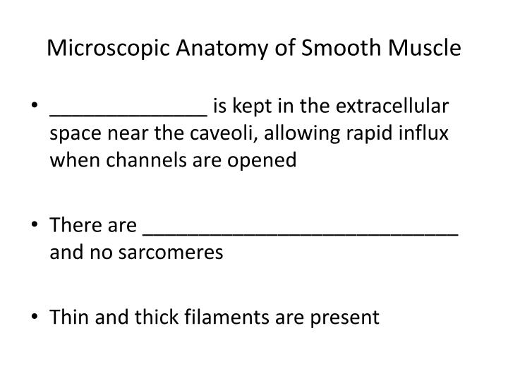 Microscopic Anatomy of Smooth Muscle