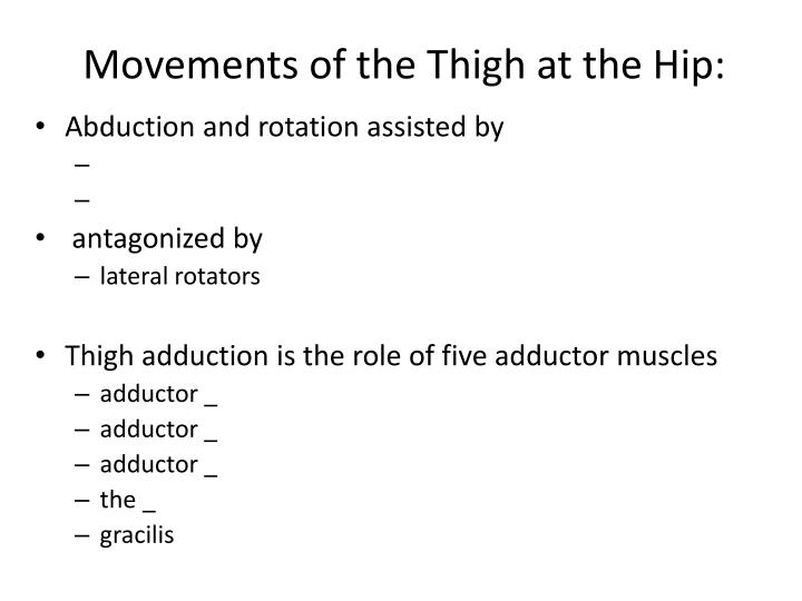 Movements of the Thigh at the Hip: