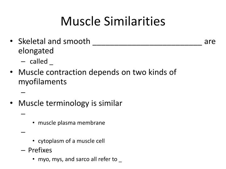 Muscle Similarities