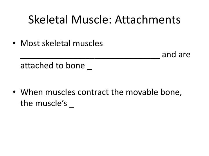 Skeletal Muscle: Attachments