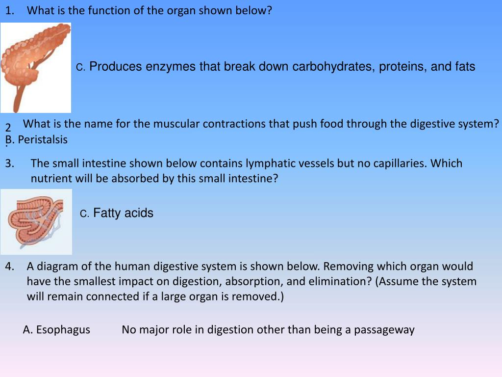Ppt What Is The Function Of The Organ Shown Below Powerpoint
