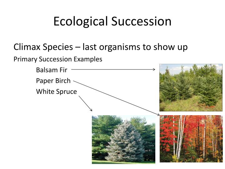 Ppt Ecological Succession Powerpoint Presentation Id2510848