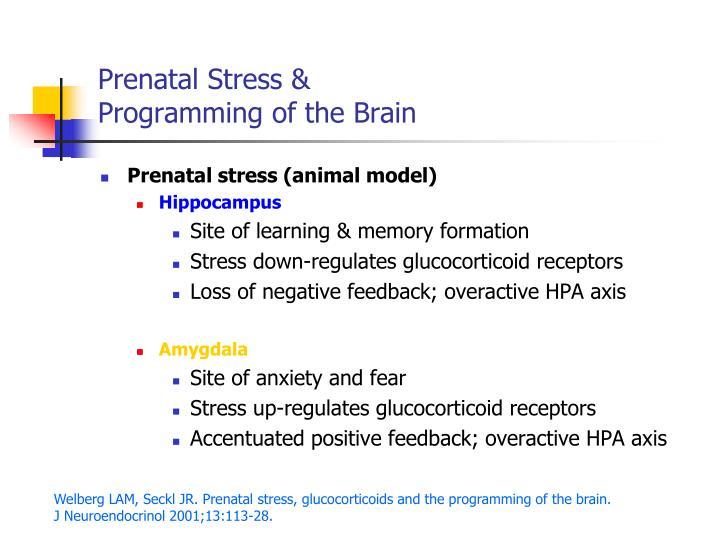 Prenatal stress programming of the brain