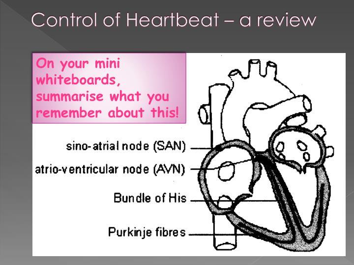Control of heartbeat a review