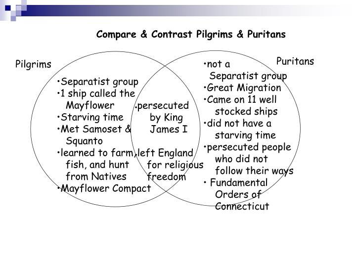 Compare & Contrast Pilgrims & Puritans