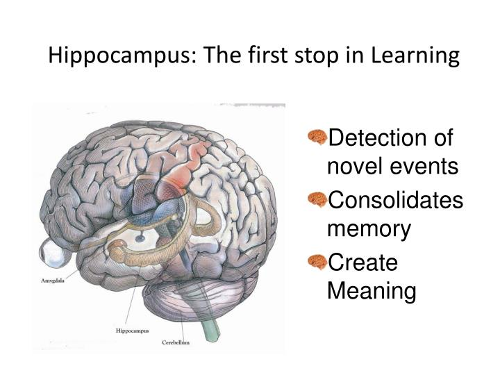 Hippocampus: The first stop in Learning