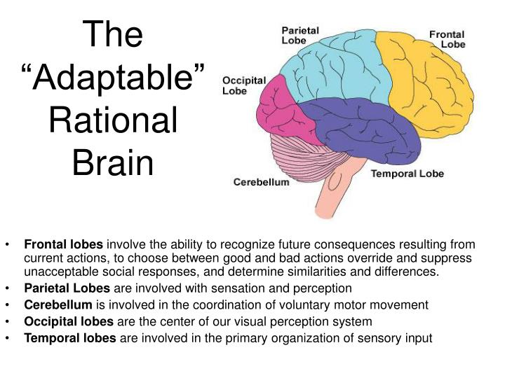 """The """"Adaptable"""""""