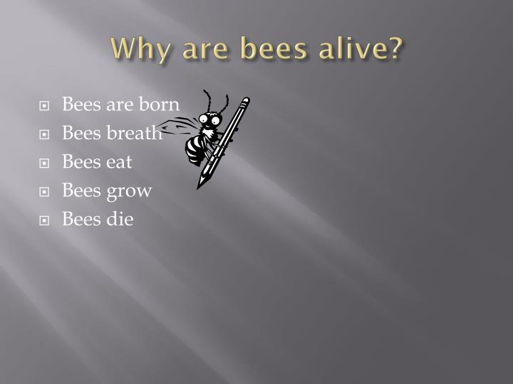 Why are bees alive